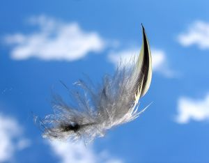 Feather in flight By Louise Docker from sydney, Australia (Solo Flight) [CC-BY-2.0], via Wikimedia Commons