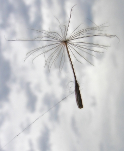 Fairy kite By aussiegall from sydney, Australia (fairies kitesUploaded by russavia) [CC-BY-2.0], via Wikimedia Commons